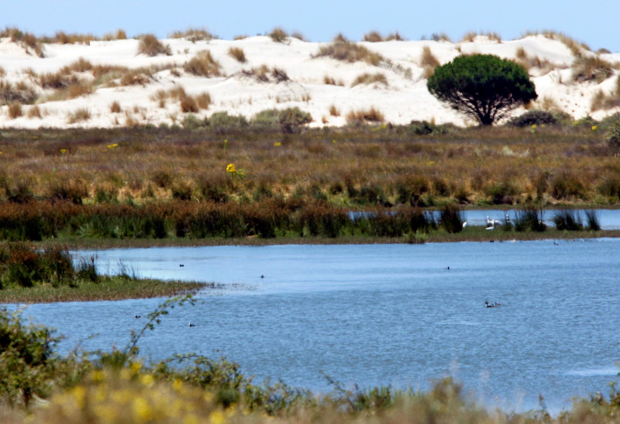 Humedal en Doñana. EFE/Eduardo Abad