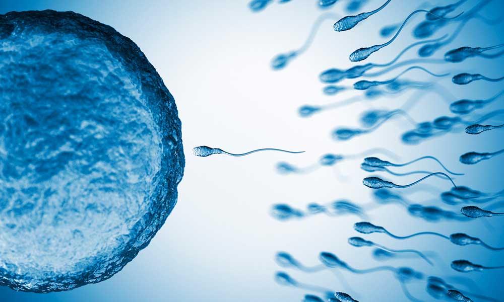 Cada vez tenemos menos espermatozoides… pero no tiene por qué ser algo malo