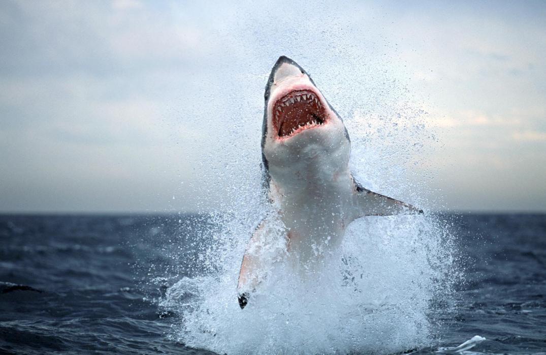 Desde 1992 han muerto un total de 25 personas en los más de 60 ataques de tiburones registrados en el litoral pernambucano/ Foto: AP Photo/Chris Fallows-Die Burger