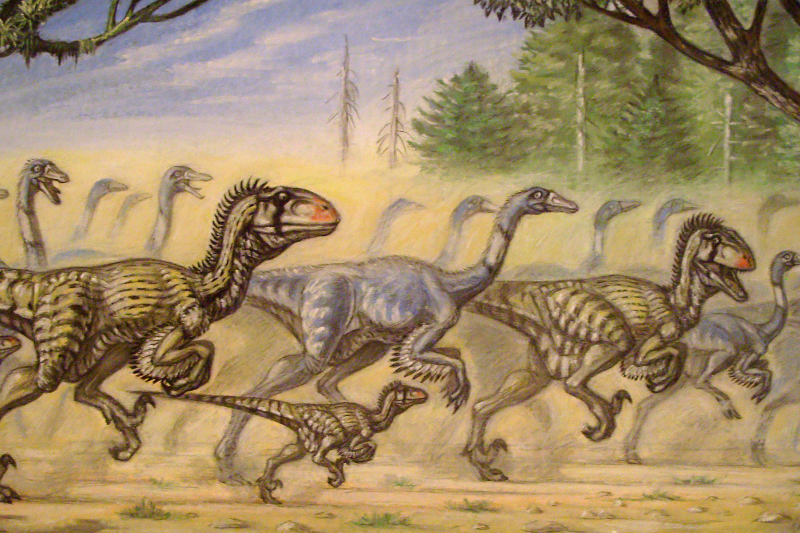 De Verdad Cazaban En Grupo Los Dinosaurios El reino animal, características y clasificaciones. la razon