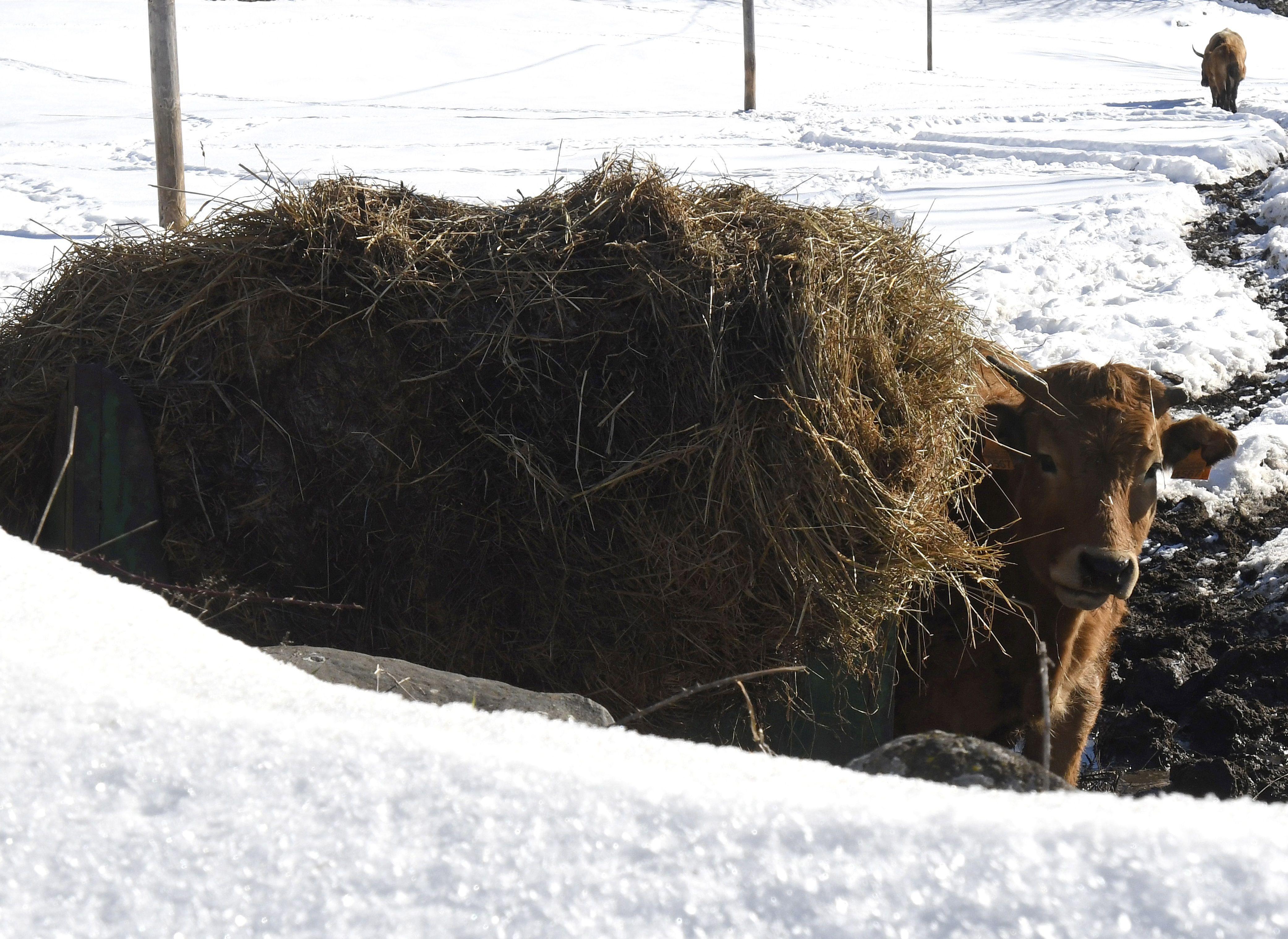 Sosas de Laciana (León) , zona afectada por el temporal de nieve y frío
