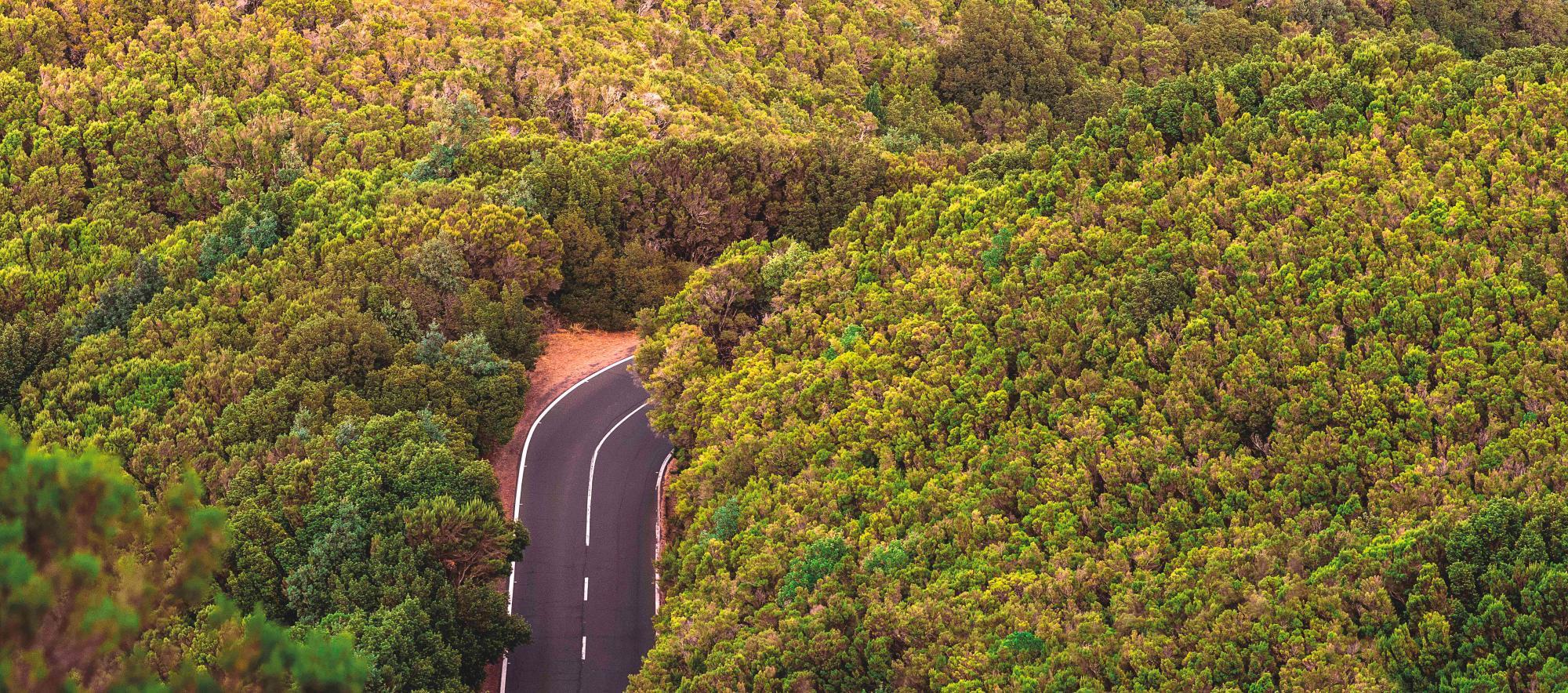 Parque Nacional de Garajonay. La Gomera/Foto: Javier Sánchez Martínez
