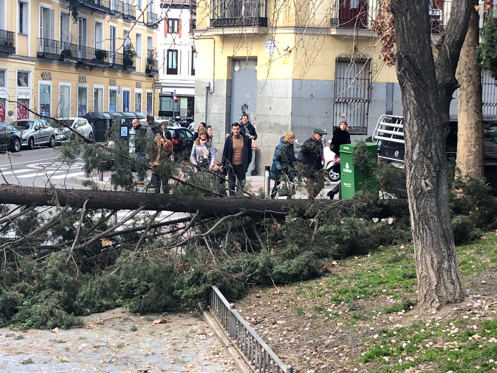 Dos detenidos tras robar más de 250 cipreses en Canals (Valencia)