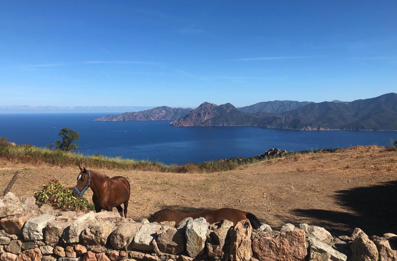 Corse : Piana, le village qui ne connaît pas la crise