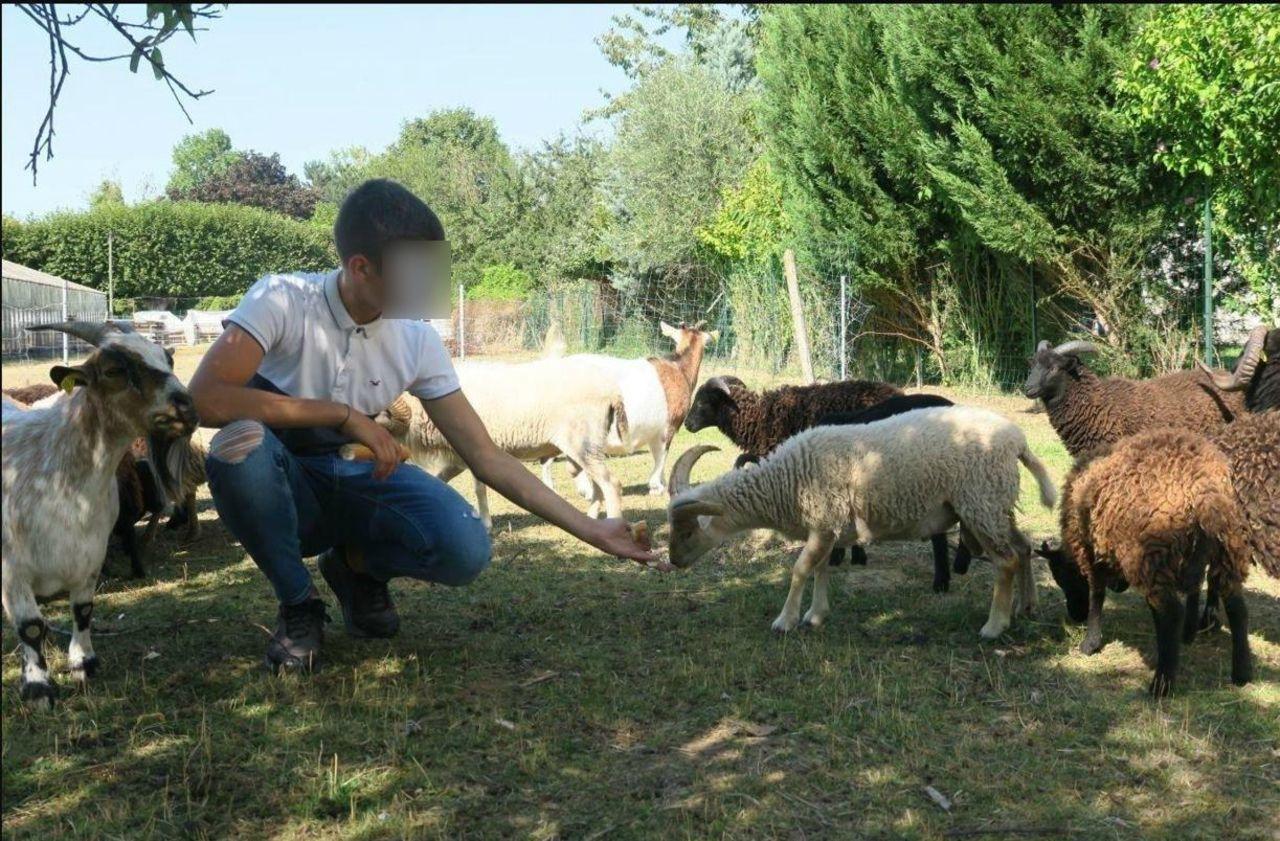 Seine-et-Marne : l'ami des bêtes maltraitait-il ses animaux ?