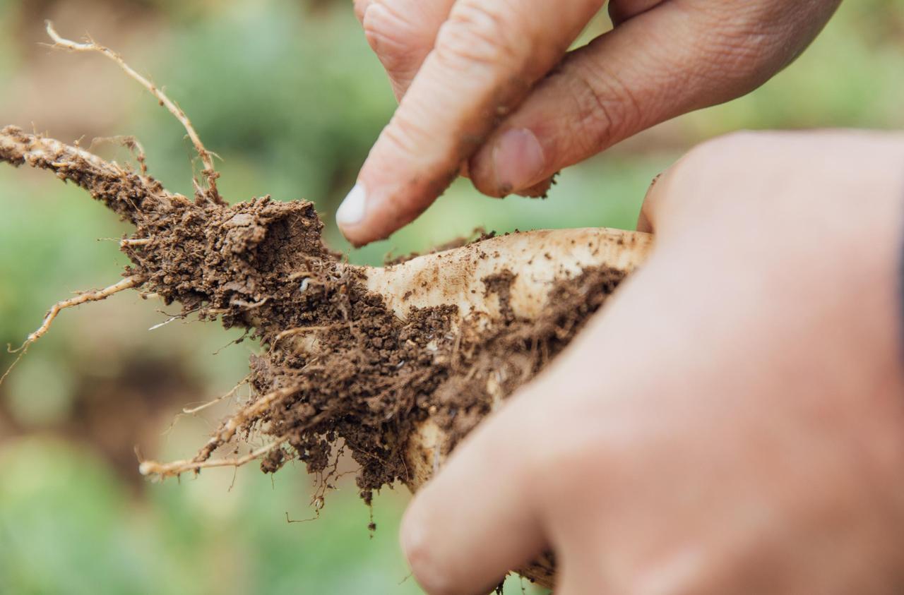 Néonicotinoïdes : l'Assemblée nationale valide le retour de l'insecticide controversé