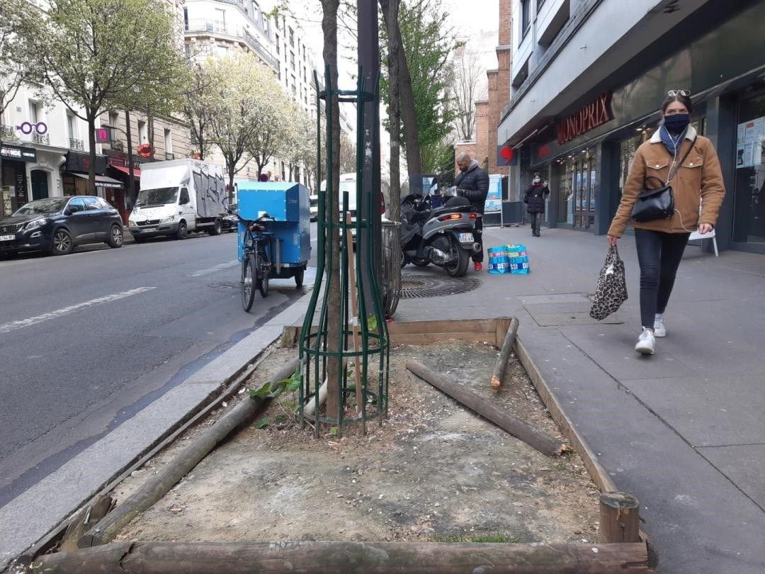 Environnement : la végétalisation des pieds d'arbres vire au casse-tête à Paris