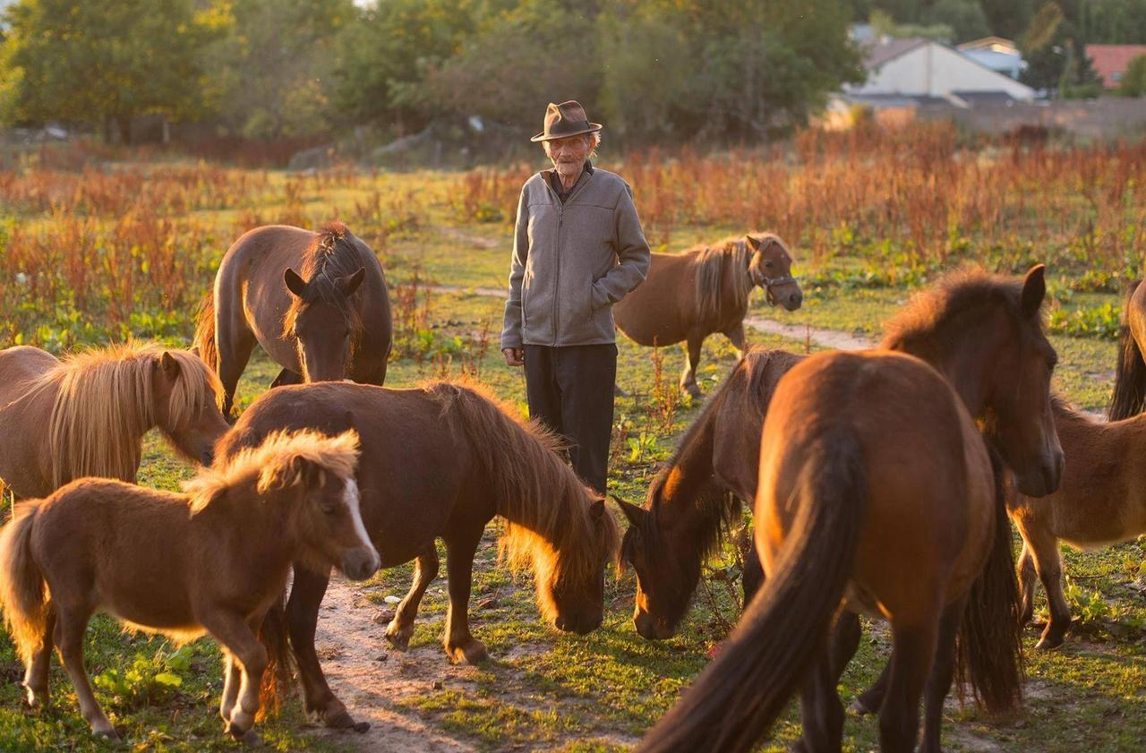 Saint-Germain-lès-Arpajon : un poney du Résistant Raymond Gurême retrouvé mort, l'oreille coupée