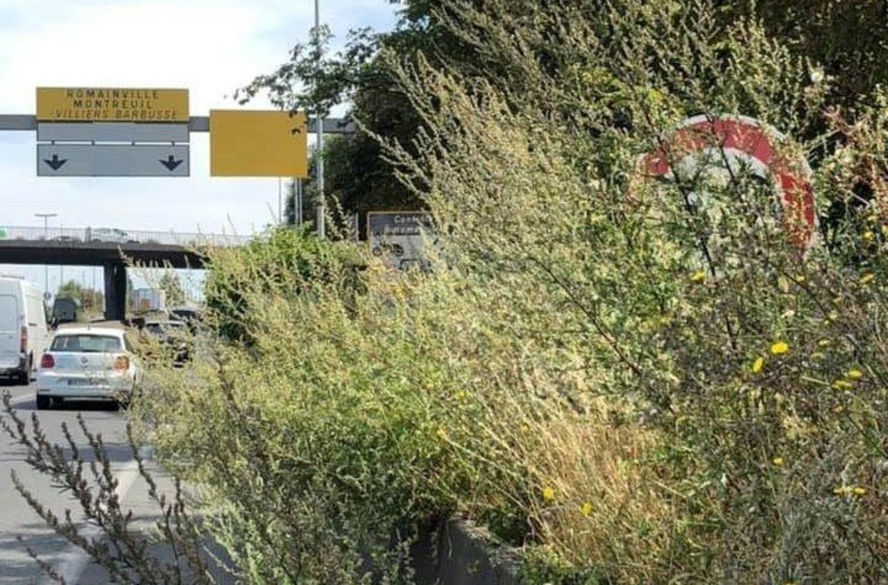 Panneau et radar cachés par les herbes sur l'A3 : un espoir d'échapper à l'amende
