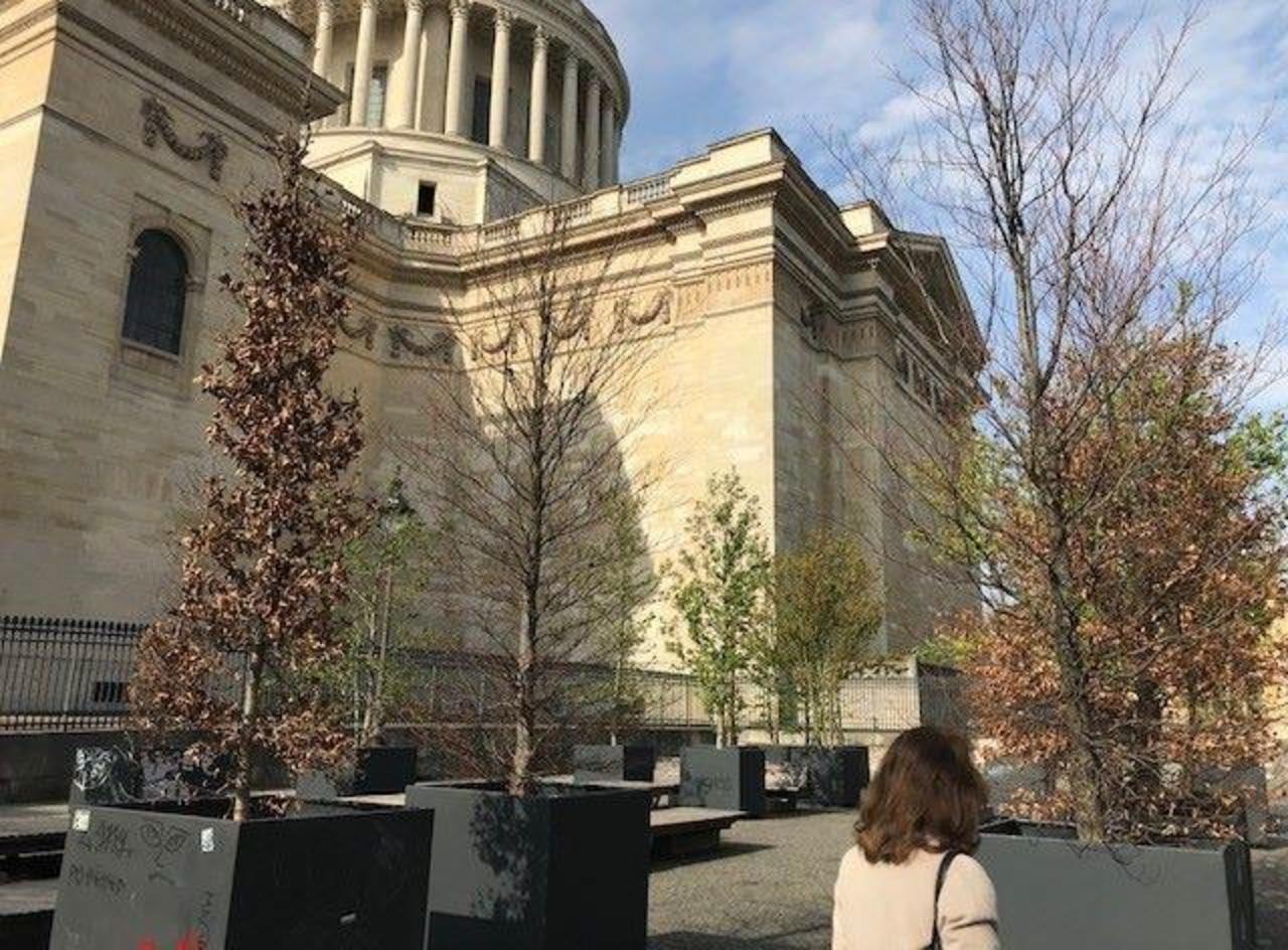 Paris : inquiétude autour des arbres en pot du Panthéon