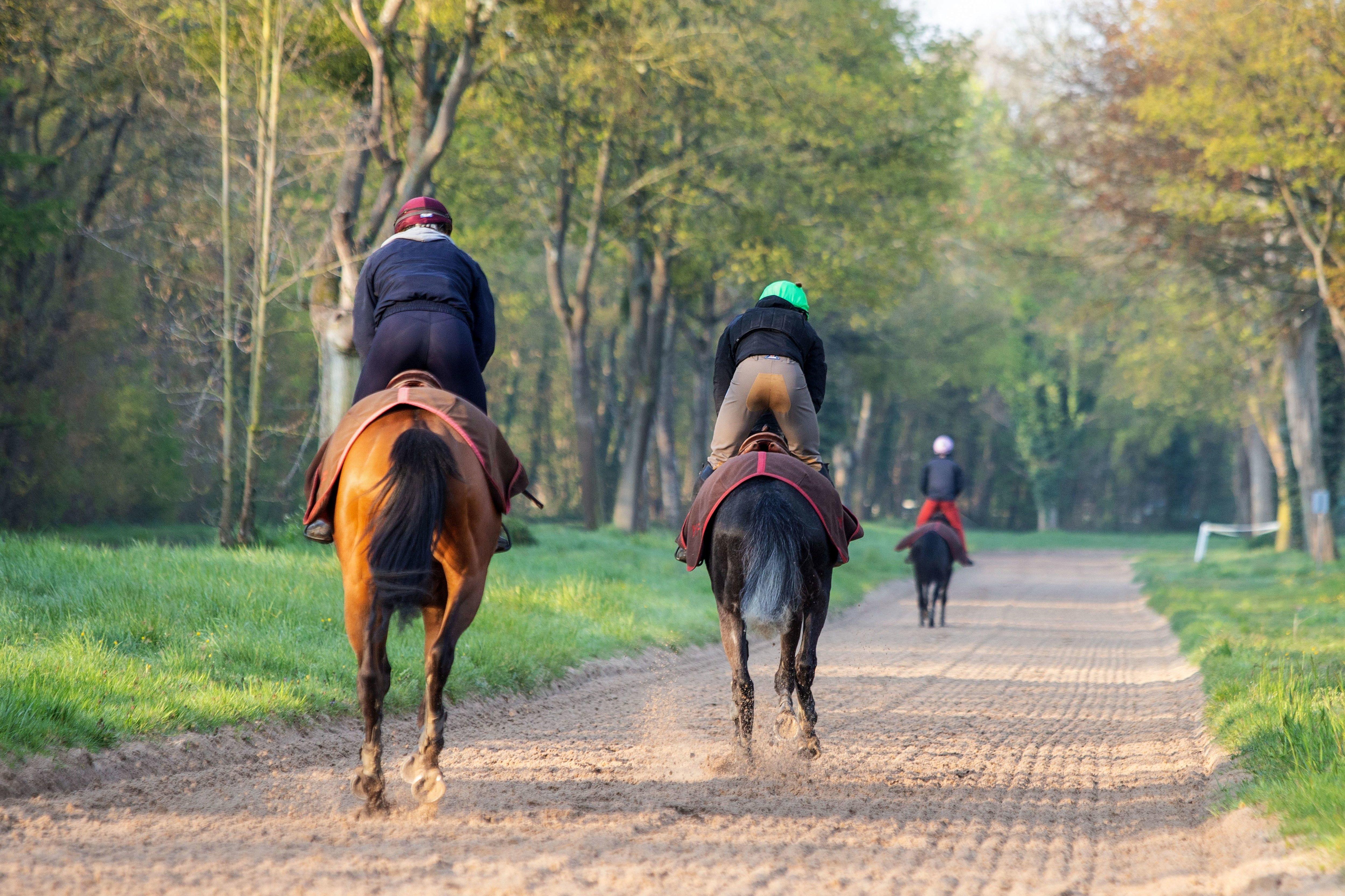 Hippodrome de Maisons-Laffitte : France Galop lance une opération séduction auprès des écuries de course