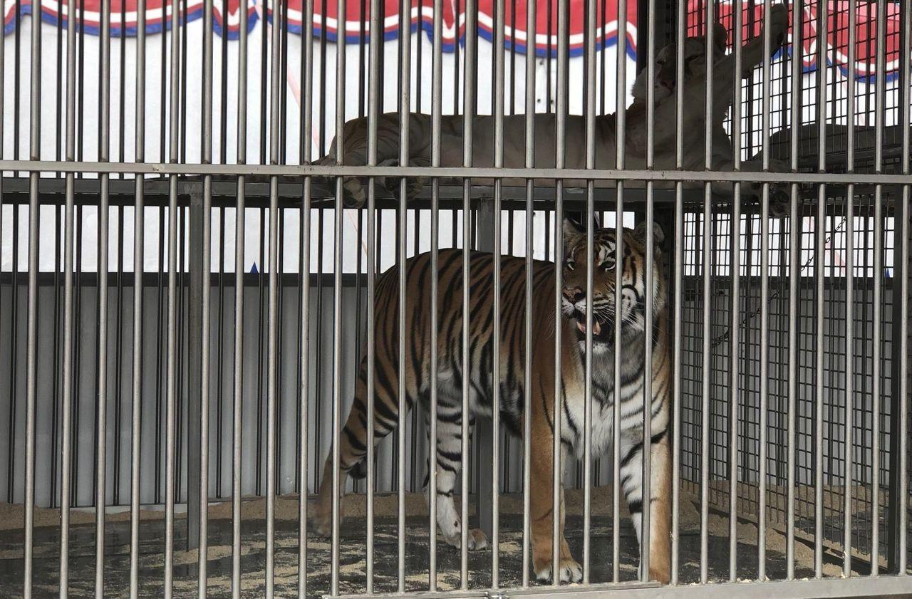 La justice annule l'arrêté contre l'implantation des cirques avec animaux sauvages à Viry-Chatillon