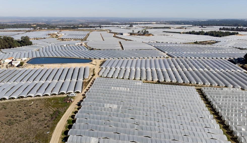 WWF calcula que en Daimiel, Doñana, mar Menor y Arenales se riegan de forma ilegal 88.000 hectáreas