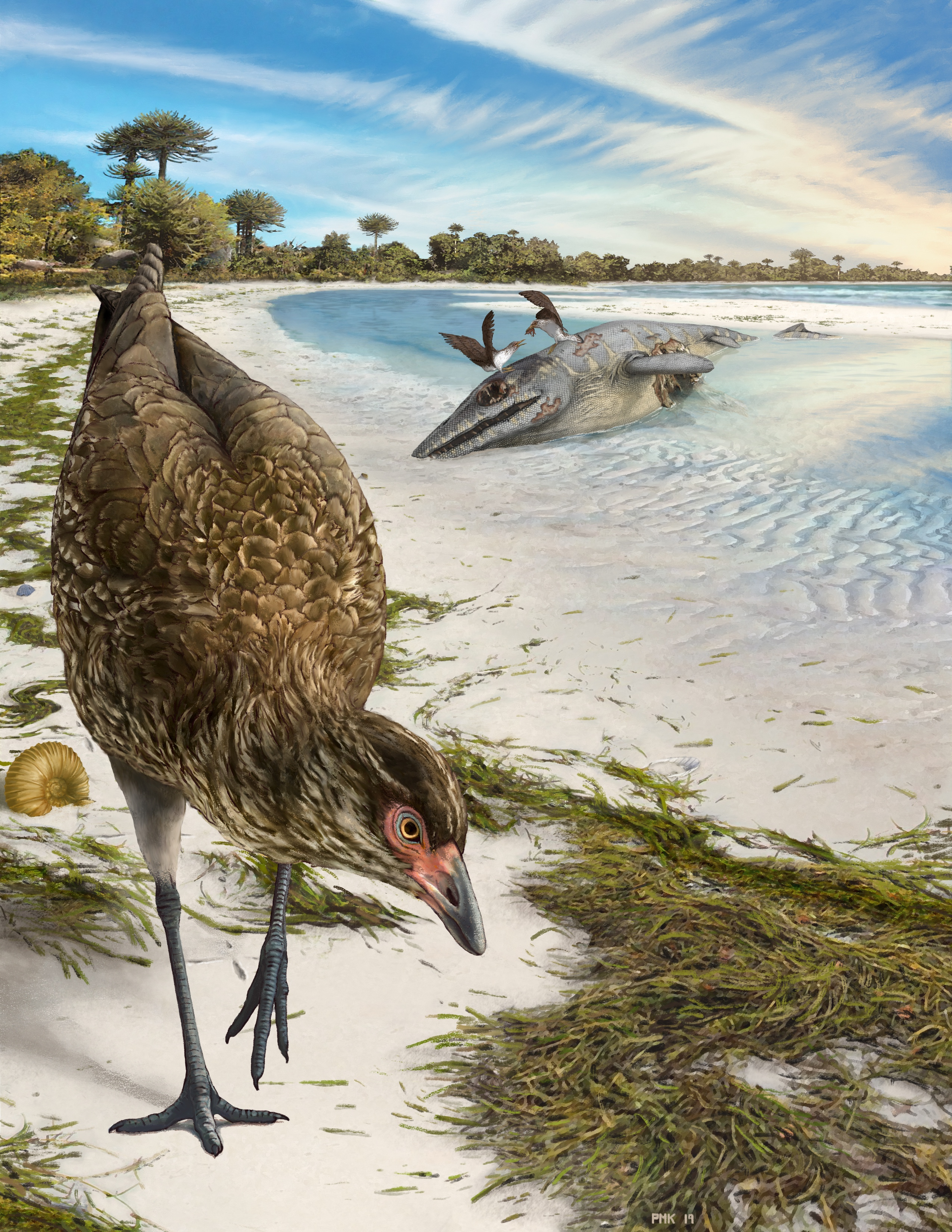 Reconstrucción artística del ave moderno más antiguo del mundo.