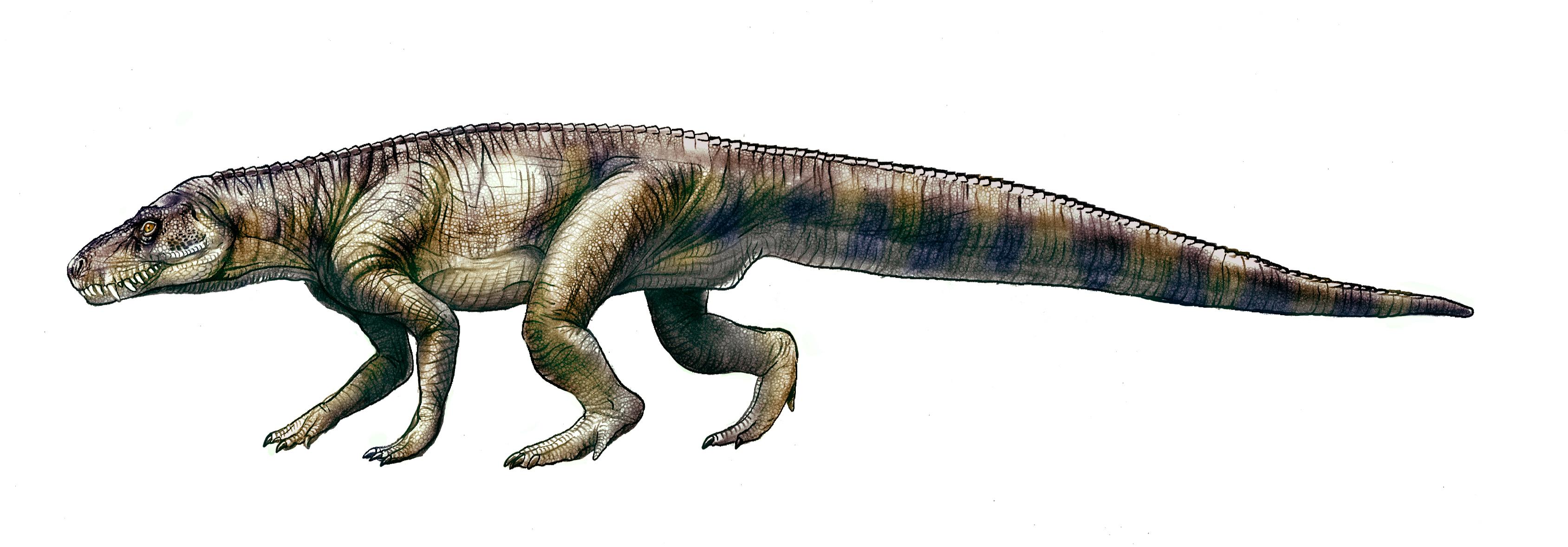Tras Los Pasos De Los Terribles Reptiles Que Reinaron Antes Que Los Dinosaurios Ciencia El Pais Encuentra los mejores vídeos de dinosaurio. reinaron antes que los dinosaurios