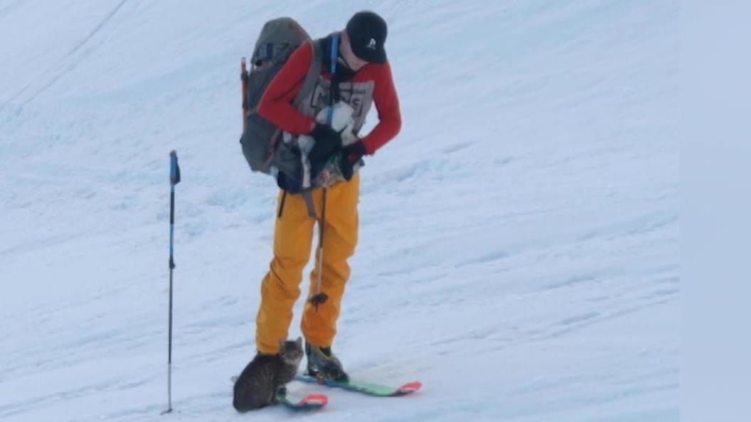 Bergsteiger treffen in 1200 m Höhe eine Katze, die mit ihnen den Gipfel besteigt