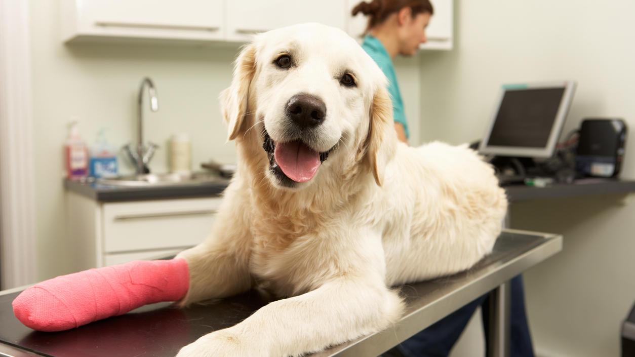 OP-Versicherungen für Hunde bei Finanztest: Das sind die besten Tarife
