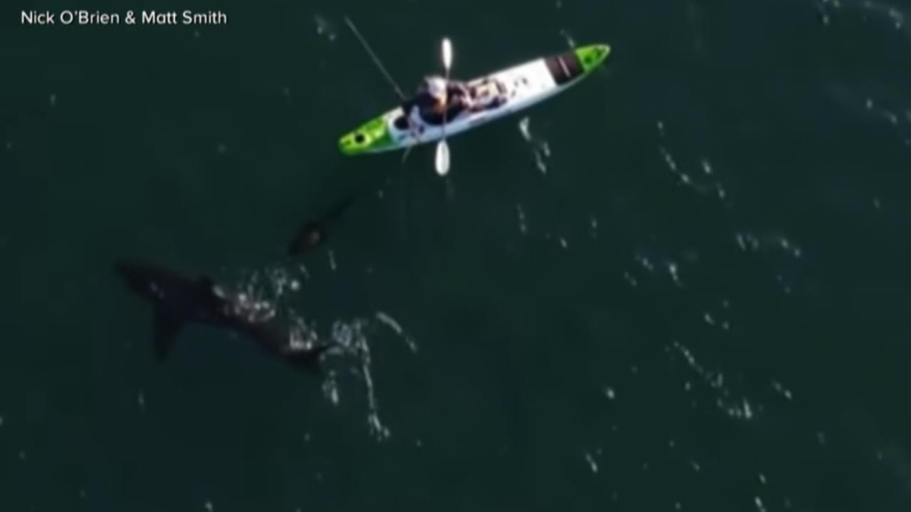 Knapp vorb(hai)geschrammt! Kajak-Fahrer wird von weißem Hai überrascht