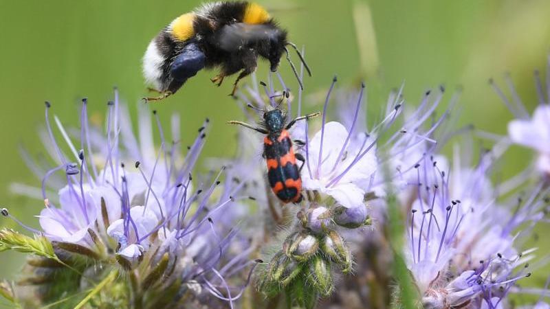 Zwei Millionen Euro für insektenfreundliche Blühflächen