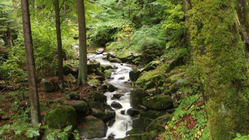 Weniger Reviere: Nationalpark Harz strukturiert sich neu