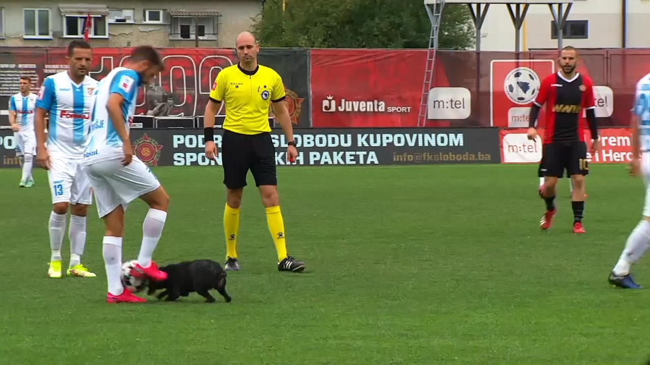 VIDEO: Platzsturm! Hund stürmt Feld, gewinnt Zweikampf und tunnelt Profi