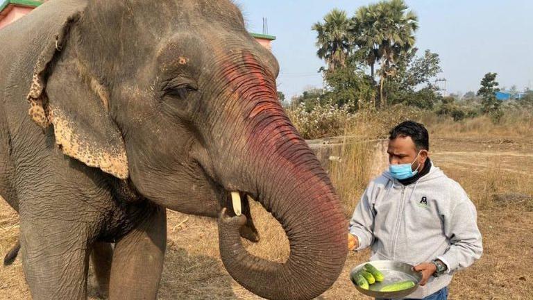 Elefant Emma nach jahrelanger Ausbeutung gerettet