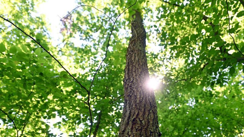 FDP fordert nachhaltige Holzproduktion in heimischen Wäldern