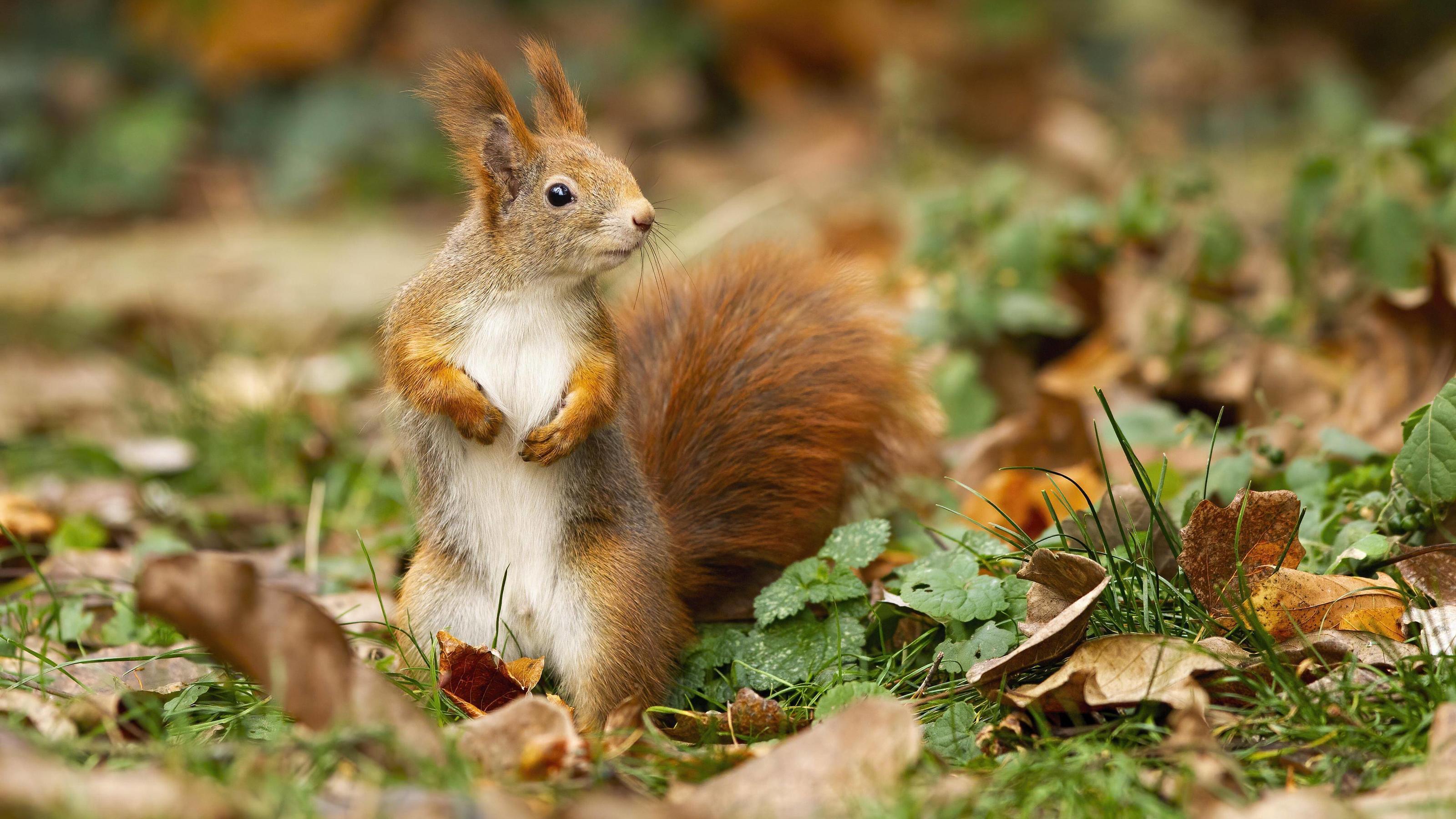 eichhörnchen erobern die herzen der instagramcommunity im