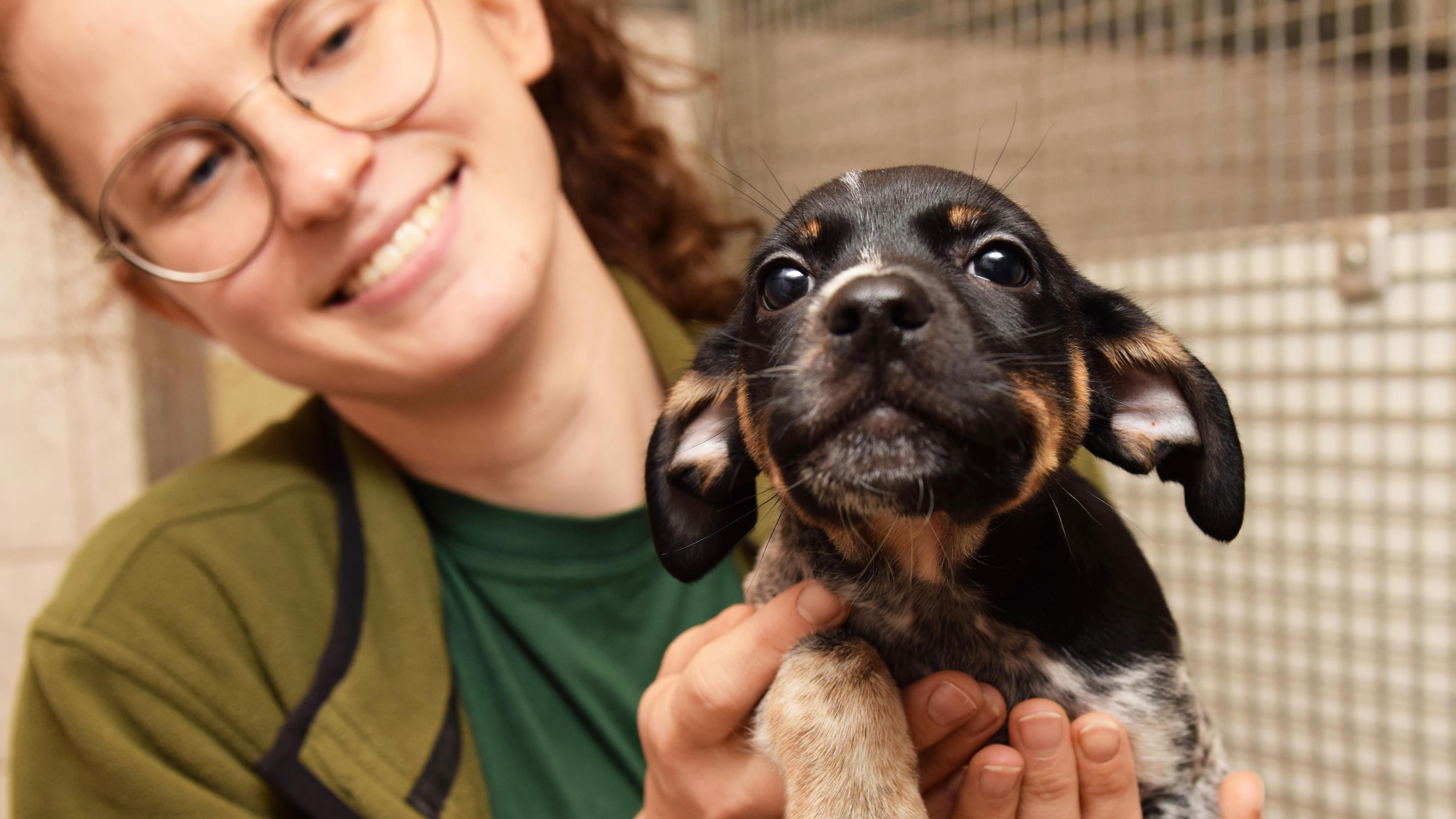 500 Euro Belohnung: Unbekannter setzt vier Jack-Russel-Terrier-Welpen in Hamburg-Bergedorf aus