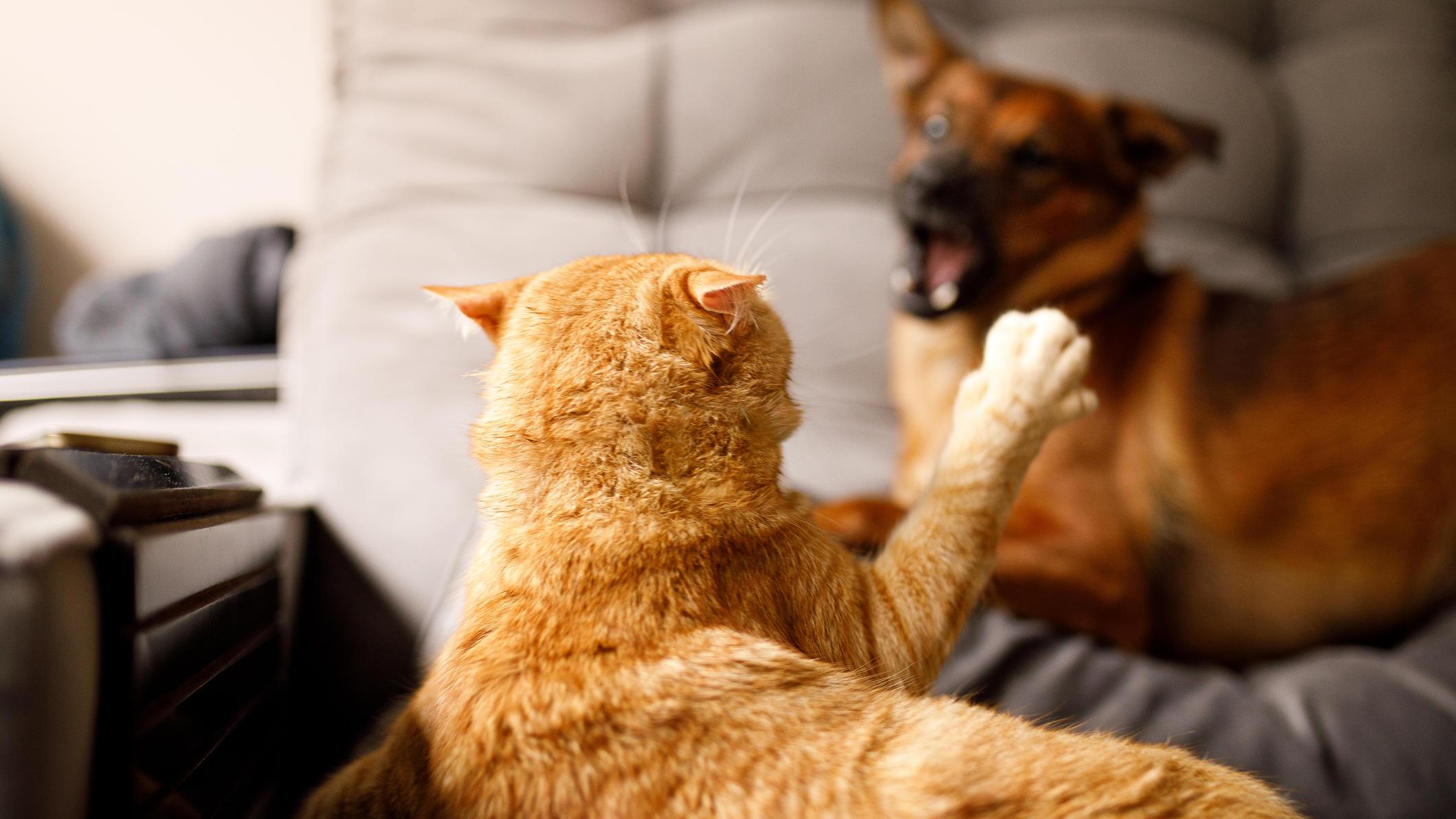 Wissenschaftler entdecken: So verstehen sich Hunde und Katzen endlich besser