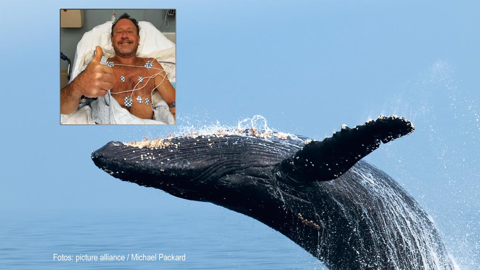 Unglaublicher Vorfall in USA: Buckelwal schluckt Fischer – und spuckt ihn wieder aus