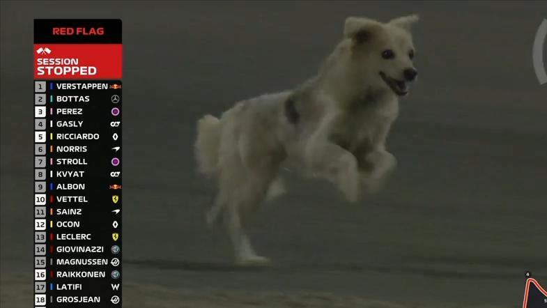 Formel 1: Who let the dogs out?! Hund stiehlt Piloten die Show, Vettel singt