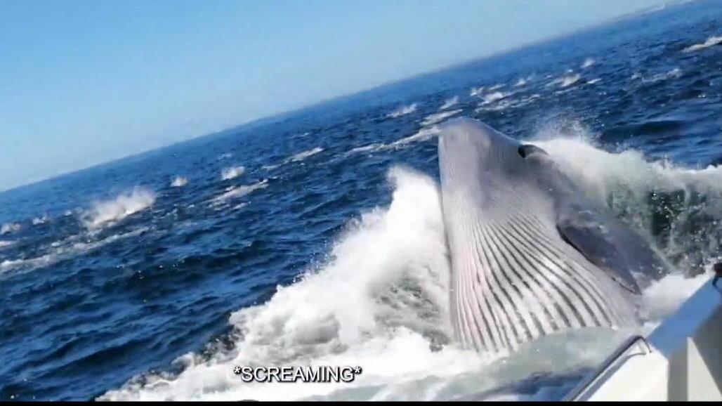 Drama in Südafrika! Vater fällt von Schiff und wird fast von Riesenwal verschlungen