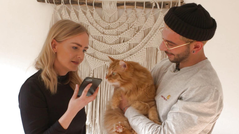 Kann diese App wirklich das Miauen von Katzen übersetzen? Wir machen den Test!