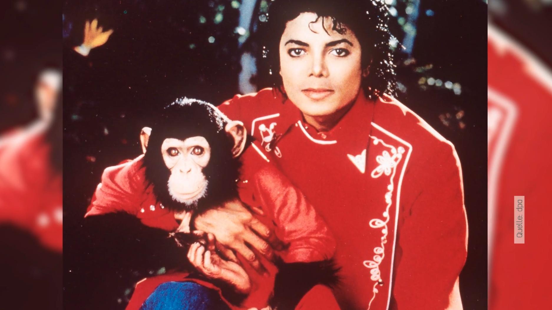 """""""Bubbles"""" - Was aus dem berühmtesten Schimpansen der Welt geworden ist"""