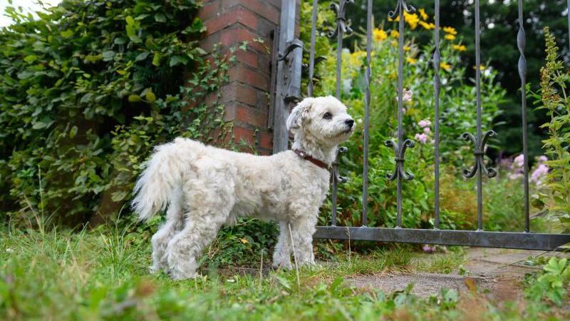 Landesuntersuchungsamt warnt Hundehalter vor Tierkrankheit
