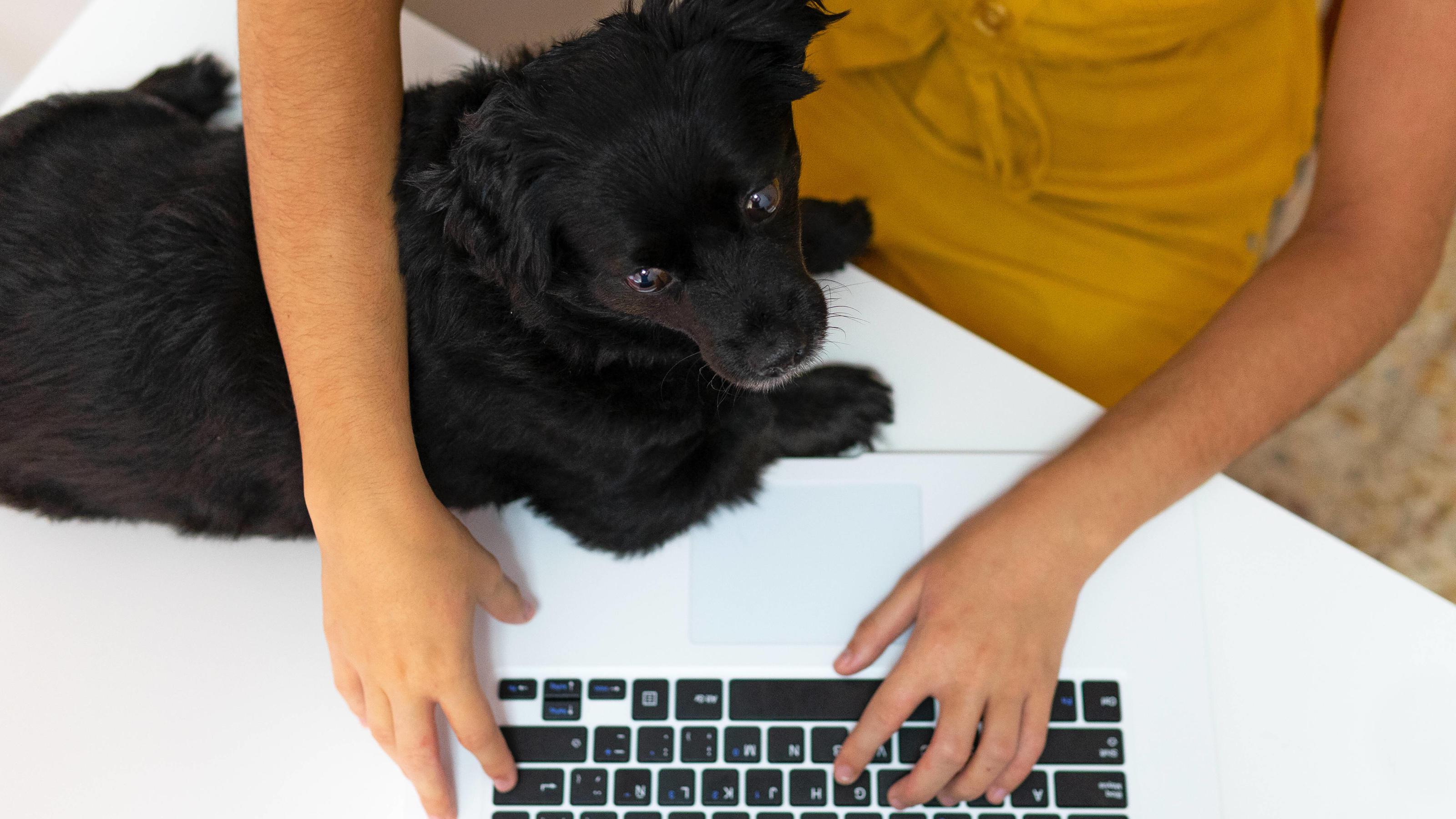 Diese Hunderassen eignen sich besonders für Berufstätige