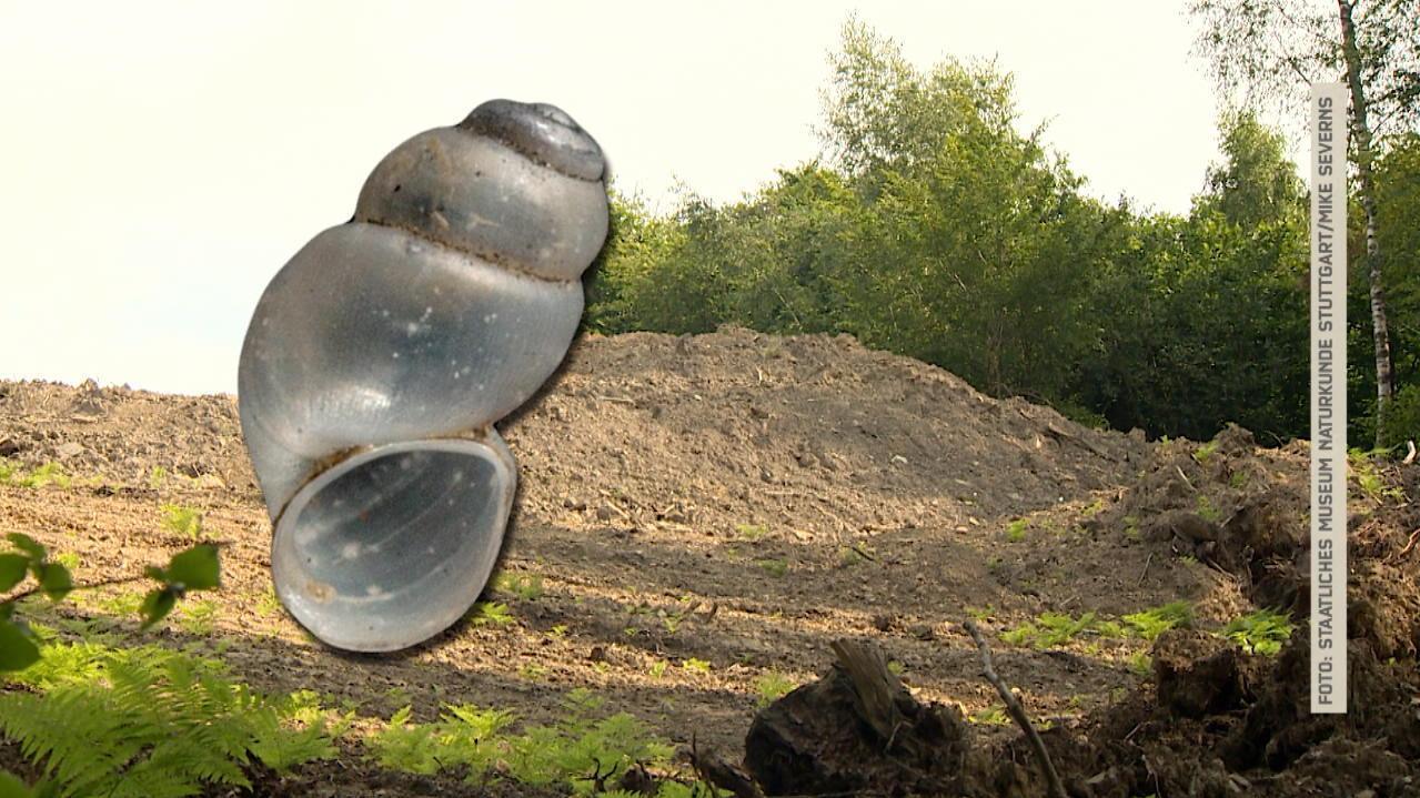 Baupause wegen Schnecke: Umweltschützer gehen auf die Barrikaden