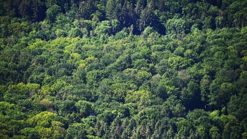 Hauk: Feuchtes und kühles Frühjahr günstig für Wälder