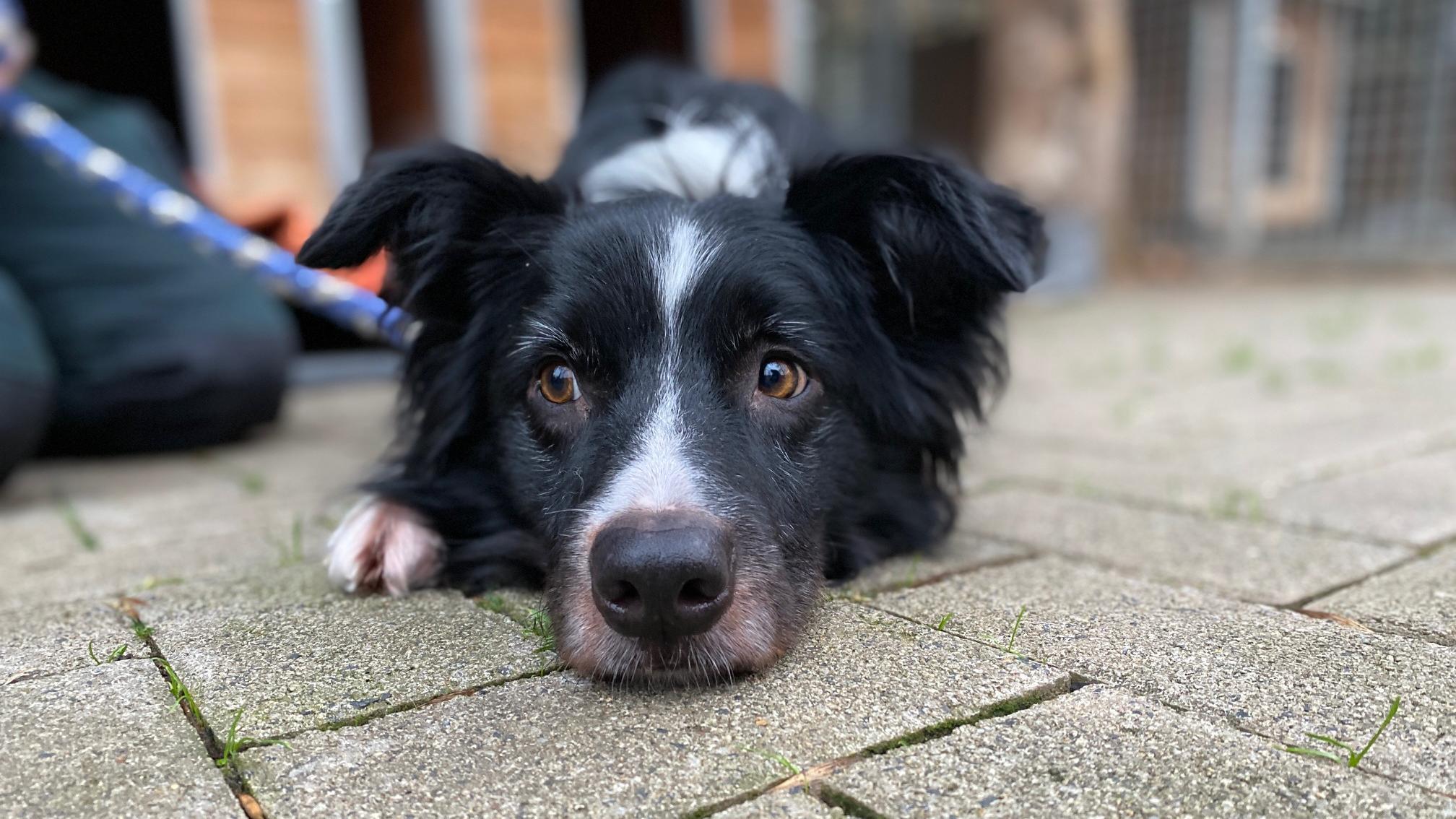 16-Jährige kauft Hund über Online-Kleinanzeige - und setzt ihn wegen Überforderung wieder aus